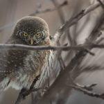 雛鳥、傷鳥緊急救援:全國野鳥協會聯絡管道列表