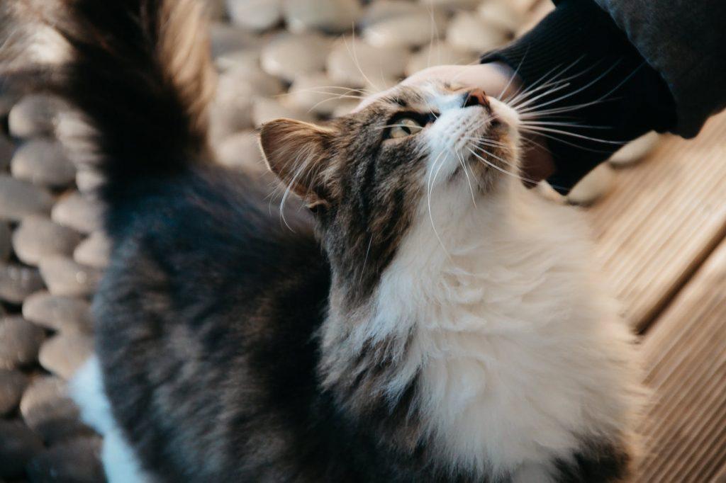 nature love animal pet cat